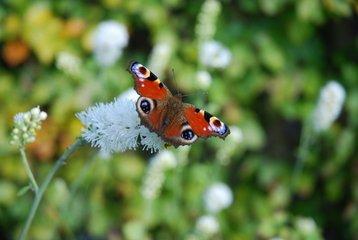 butterfly-1349735